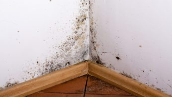 5 Tips For Getting Rid Of Mold On Walls