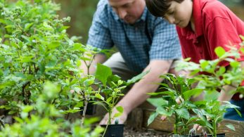 How to Make Sure Your Garden Is Healthy