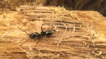Best 6 Home Ways to Get Rid of Ant Infestation